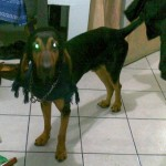 Perro Black and Tan Coonhound TACHO