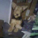 Perro Airedale Terrier ROBIN