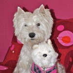 Perro West Highland White Terrier Momo