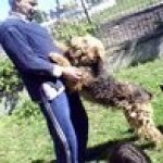 Perro Airedale Terrier HANNA