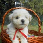 Dali The Nayka´s Breed - Cachorro en venta de Nayka's Breed