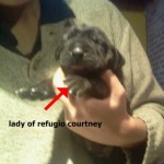 lady - Cachorro en venta de Criadero refugio courtney