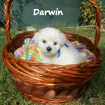 Darwin The Nayka´s Breed - Cachorro en venta de Nayka's Breed