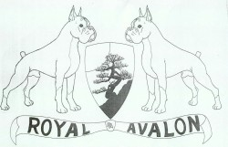 Boxer de Royal Avalon