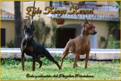 Elite Kings Kennel