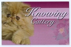 Knowing cattery