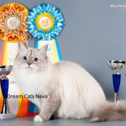 Dream Cats Neva