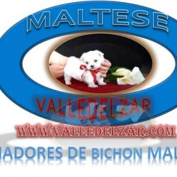 Valledelzar  Kennel