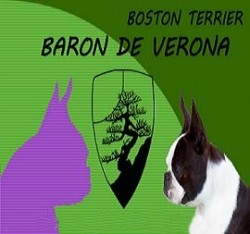 Baron de Verona / Royal Avalon - Boston Terrier y Bóxer