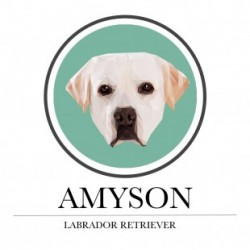 Amyson Labrador Retriever