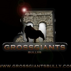 grossgiantsbully