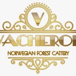 VACHERON NORWEGIAN FOREST CATTERY