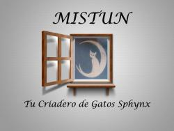 Mistun Royal Sphynx