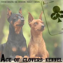 Ace Of Clovers