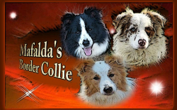Border Collie Mafalda's