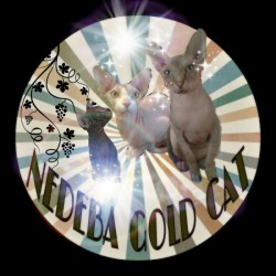 Nebeda gold cat