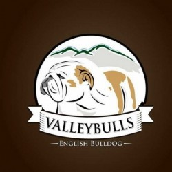Valleybulls