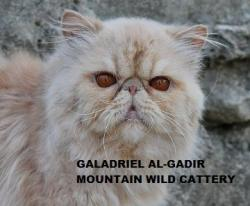 Mountain Wild Cattery