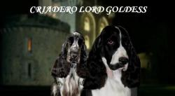 Criadero Lord Goldess