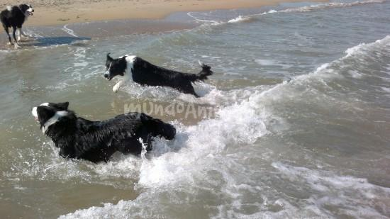 Fotos  del criador Border Collie Work & Beauty - mundoAnimalia