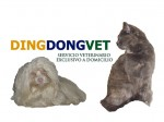 DingDongVet | Veterinarios en Madrid